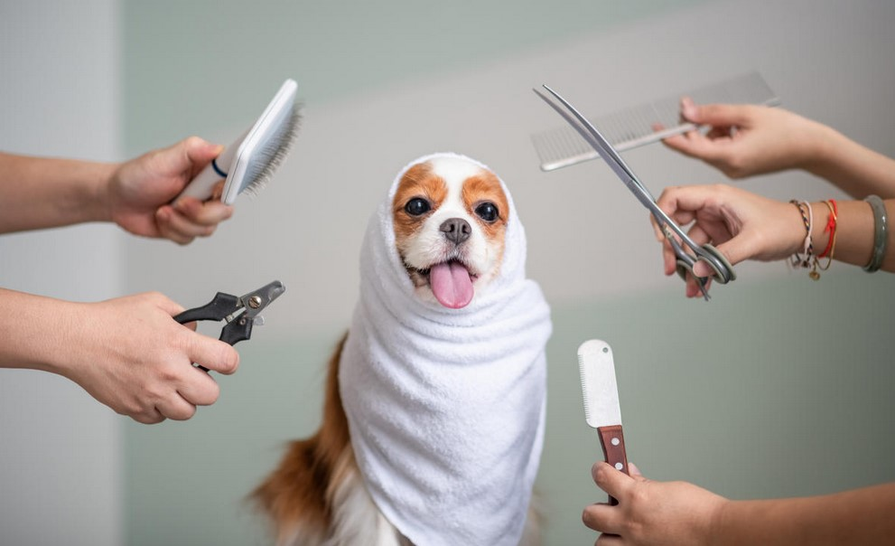 Pet Care and Grooming: What Pet Owners and Industry Professionals Can Expect in 2021